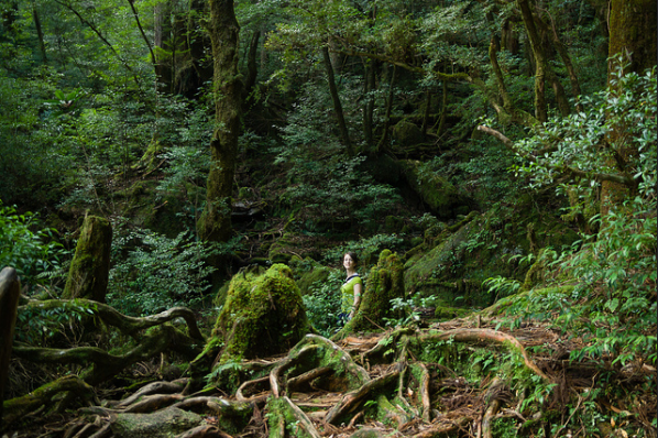 Yakushima is a sub-tropical island covered in ancient rainforests and surrounded by coral reefs.This island has become a UNESCO World Natural Heritage site in 1993.