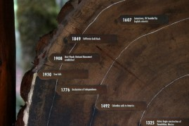 Age rings are shown on a cut section of a Coastal Redwood tree at Muir Woods National Monument on August 20, 2013 in Mill Valley, California.